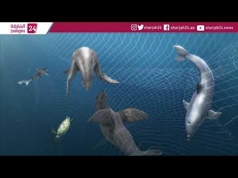 California senators call for nationwide drift net ban