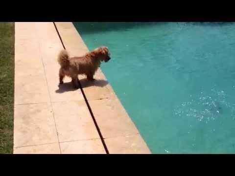 dog catches giant squid