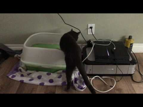 Cat thinks he's cleaning his litter box. My cat is broken