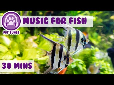 Music for Fish! Fish Tank Music.....We Love Pet Fish!, Fish Therapy, Aquarium Relax, Help My Fish