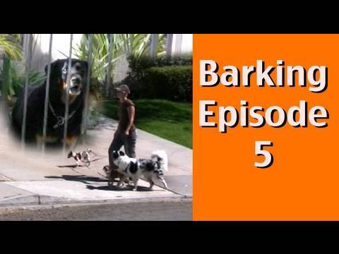 Barking Episode 5- Barking at Dogs Behind Fences