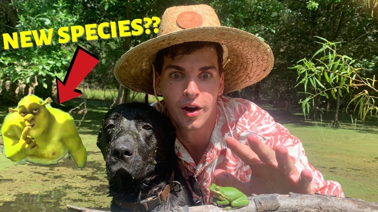 How to Find and Catch Green Tree Frogs (In SHREKS SWAMP!?) *creature feature*