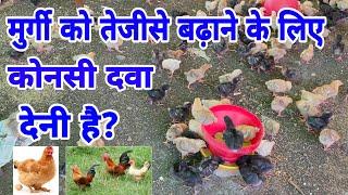 मुर्गी का वजन जल्दी बढ़ाने के लिए मल्टी विटामिन दे | poultry medicine