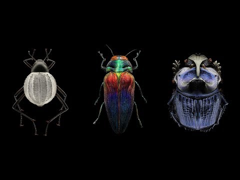 Mind-blowing, magnified portraits of insects | Levon Biss
