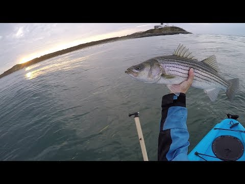 Awesome Top Water Strikes! Catching Stripers During Montauk Mini Blitz.