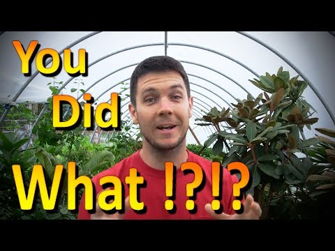 The Best Organic Fertilizer for Plants   It's Free, Available, and Urine is Full of Nutrients!