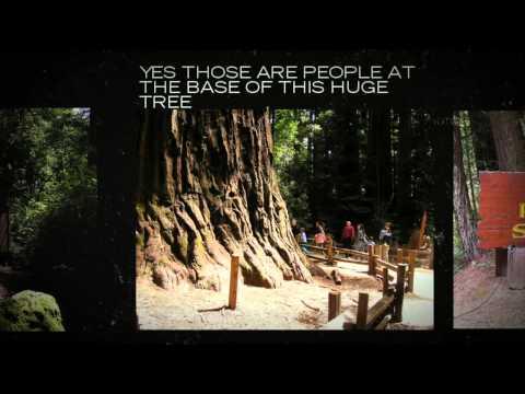 Tent Cabins Big Basin Redwoods Park : Reservations 800.444.7275