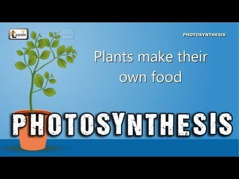Photosynthesis | Photosynthesis in plants | Photosynthesis - Biology basics for children | elearnin