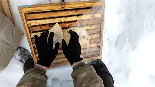 Зимовка пчел на сетчятом дне в Кировской области часть 2