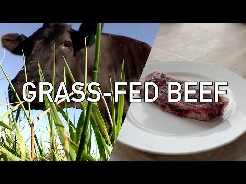 Grass-Fed Beef: EXPLAINED! - BenjiManTV