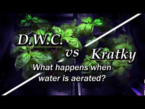 Kratky vs DWC - Aeration vs No Aeration (Hydroponic Basil) Part 1