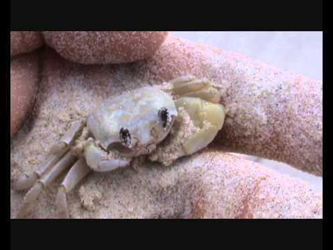 HOW TO FIND A CRAB ON THE BEACH!! Byron Bay Australia Discovery