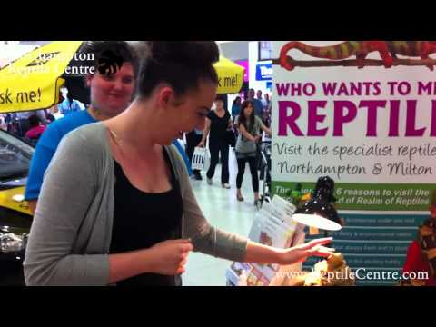 Lady Meets a Bearded Dragon & Blue-tongued Skink for the First Time