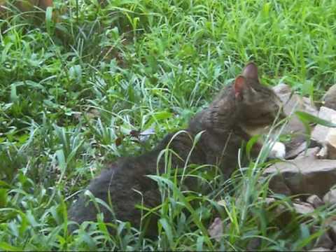 Kitties in the Yard
