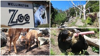 Wellington Zoo 2018 Overview | ZooBoyNZ
