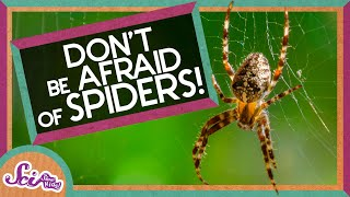 Don't Be Afraid of Spiders!