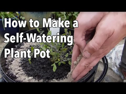 How to Make a Self-Watering Plant Pot