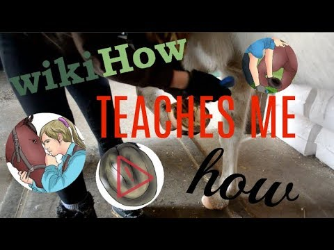 WikiHow Teaches Me How To Pick My Horse's Hoof | EquineCass