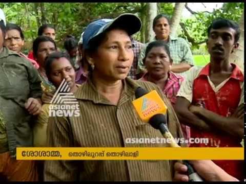Success story in farming by Kozhanjeri Panchayath