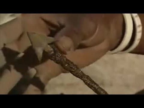 Desert Rose Poisonous Arrows Ray Mears World Of Survival Bbc