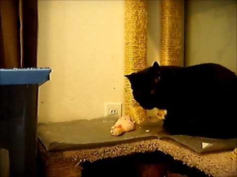 Cats fed prey model raw
