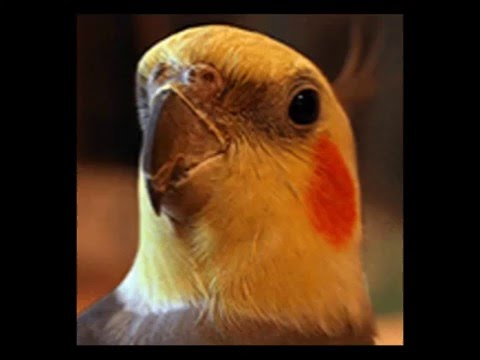 How To Build An Aviary|how to build aviary bird cage plans