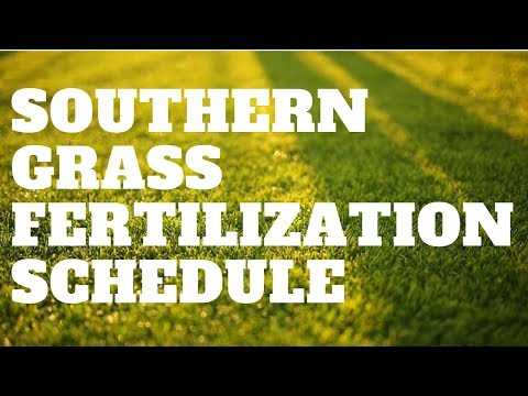 Southern Grass Fertilization Schedule | Sept 1st