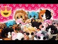 Download Our Beanie Boo Cat Collection 2018 MP3,3GP,MP4