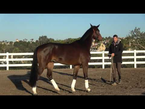 Spooky dressage horse? build confidence with this simple exercise