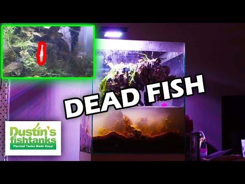 DEAD FISH - Aquarium Reset. KIDS Planted Aquarium. Daughter's Tank New Betta Fish