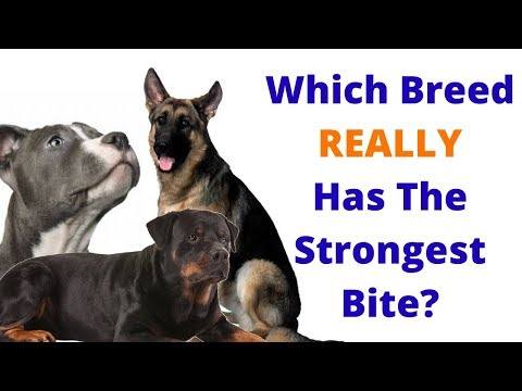 6 Things About Dogs You Thought Were True But AREN'T!