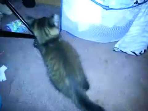 My swet cat Cocoa