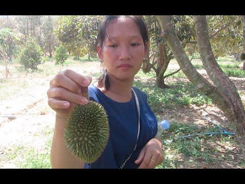 Durian Plantation at Phnom Voar Natural Tourism Area in Kampot