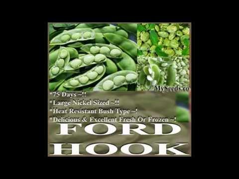 Fordhook 242 Bush Lima Bean Seeds,  SEEDS on  www.MySeeds.Co