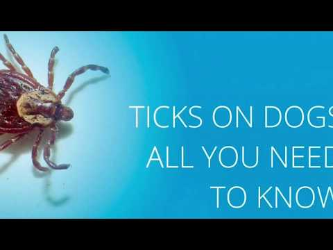 Where to Find Ticks On Your Dog!