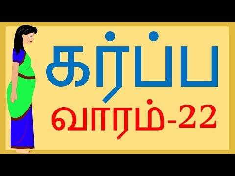 Pregnancy   Tamil   Week by Week   Week 23    வாரம் 23