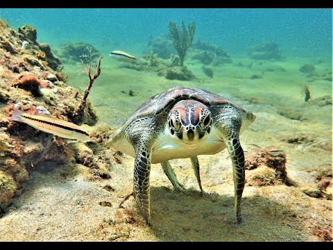 How to Save  Sea Turtles