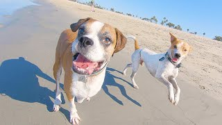 This homeless dogs reaction to seeing the ocean for the firs time will make your day!