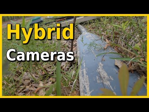 Best Cameras for Fishing Videos Hybrid Edition
