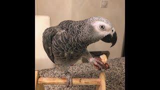Попугай Аркадий - хулиган