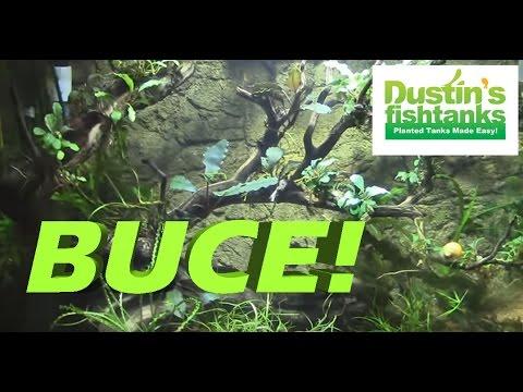 How I aquascape the 26 BOW FRONT Aquarium- TANKS TOUR
