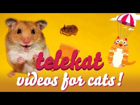 Telekat: videos for cats to watch - cutest cheese munching robo hamsters!