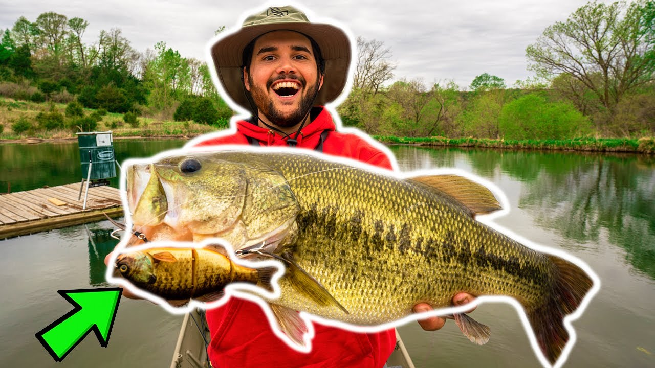 BIG SWIMBAIT Catches GIANT BASS in BACKYARD POND!!! (New Pond PB)