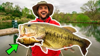 BIG SWIMBAIT Catches GIANT BASS in BACKYARD POND!!! (New Pond PB)