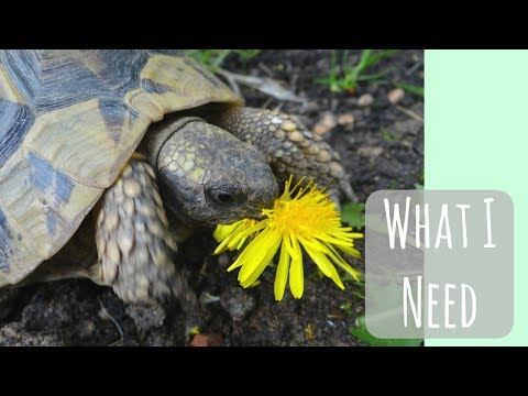 What you need for a Tortoise