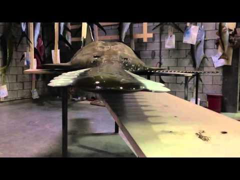Sawfish mount Trailer