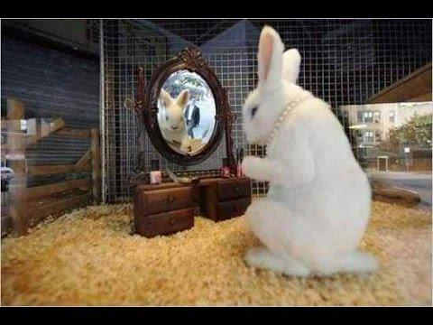 Funny Baby Bunny Rabbit Videos Compilation - Cute Rabbits | Full HD