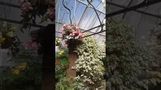 Flowers garden indoor