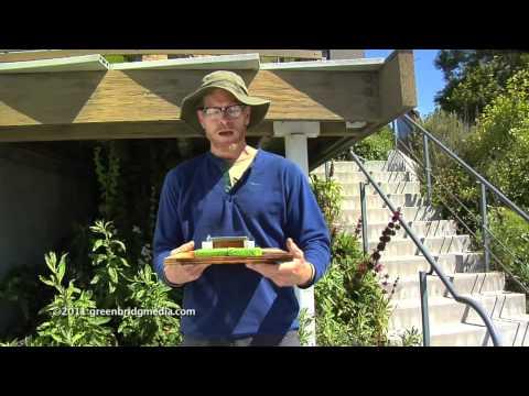 Rain Water Harvesting Demonstration with Brad Lancaster
