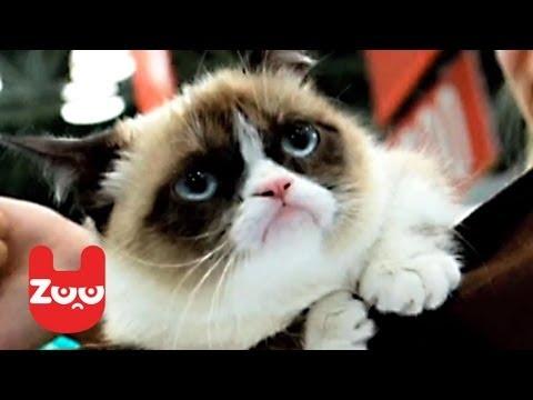 Grumpy Cat Releases A Book